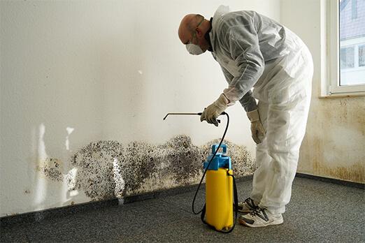 mold remediation san diego